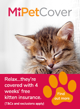 MiPet Cover kitten advert