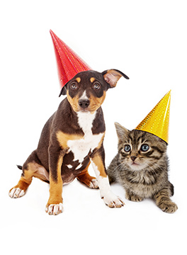 Puppy and kitten in party hats
